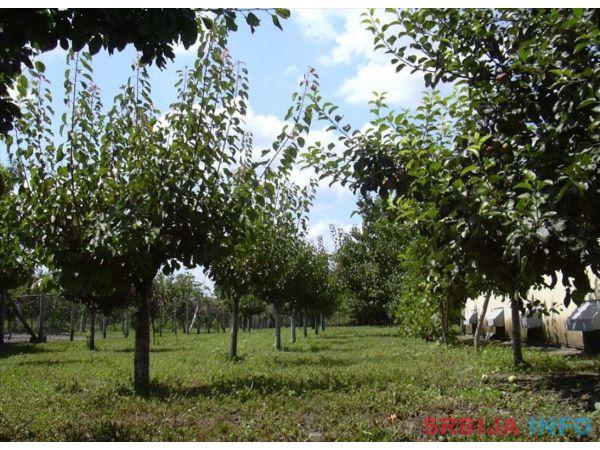 Prodajem kucu (poljoprivredno gazdinstvo) u Banatskom Karadj
