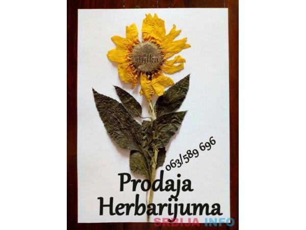 Herbarijumi za fakultete, srednje i osnovne škole