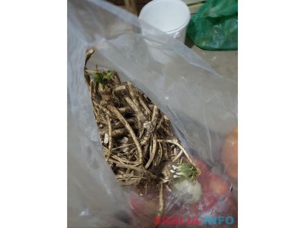 Prodaja rena i sadnica