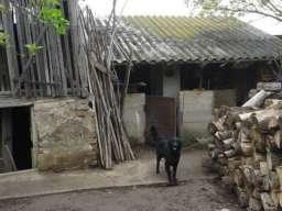Prodaja kuce u Gardinovcima