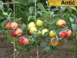 Rezervacija i prodaja voćnih sadnica jesen 2021
