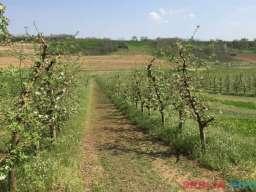 Imanje tj. vocnjak jabuke i sljive u Irigu
