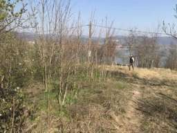 Plac na samoj obali Dunava Vinci-Golubac 13ari 8000e