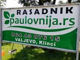 Paulovnija