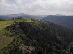 Prodajem polu sumsko zemljiste u blizini Uvca