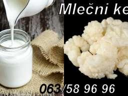 Kefirna zrnca za pravljenje mlečnog kefira količina za 0,5L