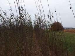 Sadnice voca i ukrasnog bilja-Ruski Krstur