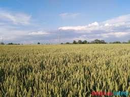 Zemljiste 1.52 hektara u srcu Sumadije